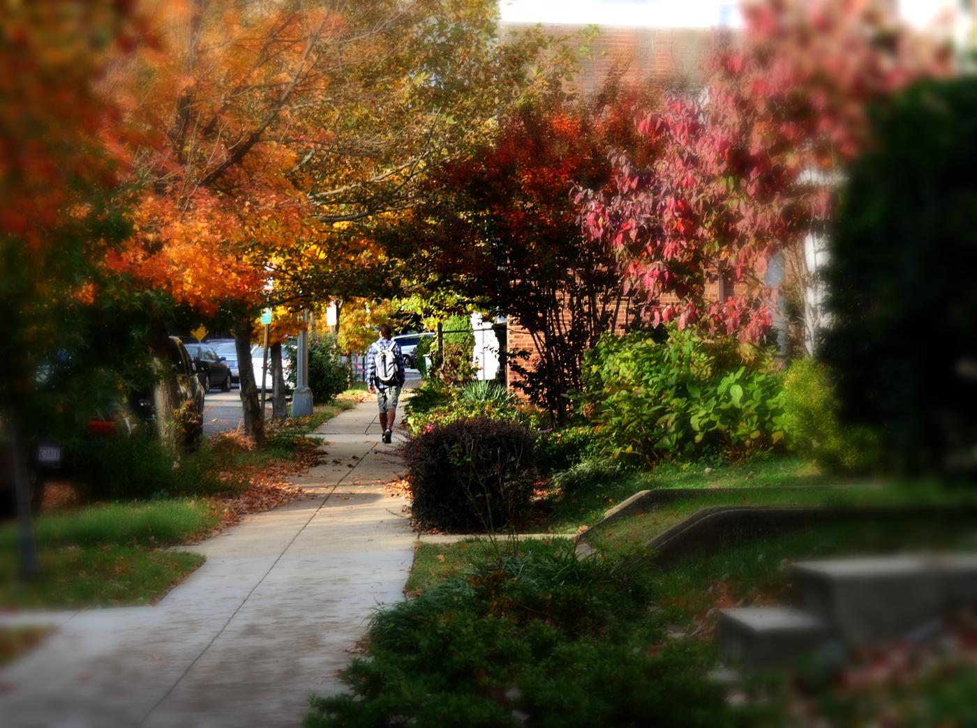 Glover Park DC
